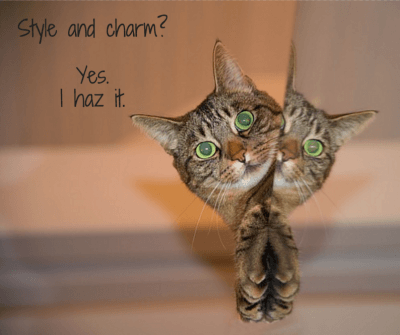 cat style and charm for headlines blog